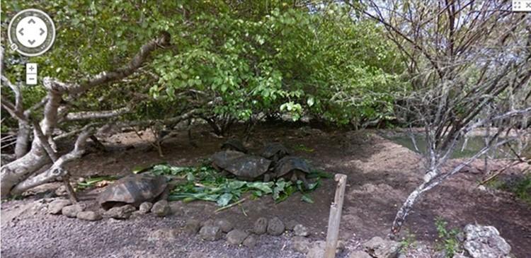 google galapagos islands street view research darwin biodiversity