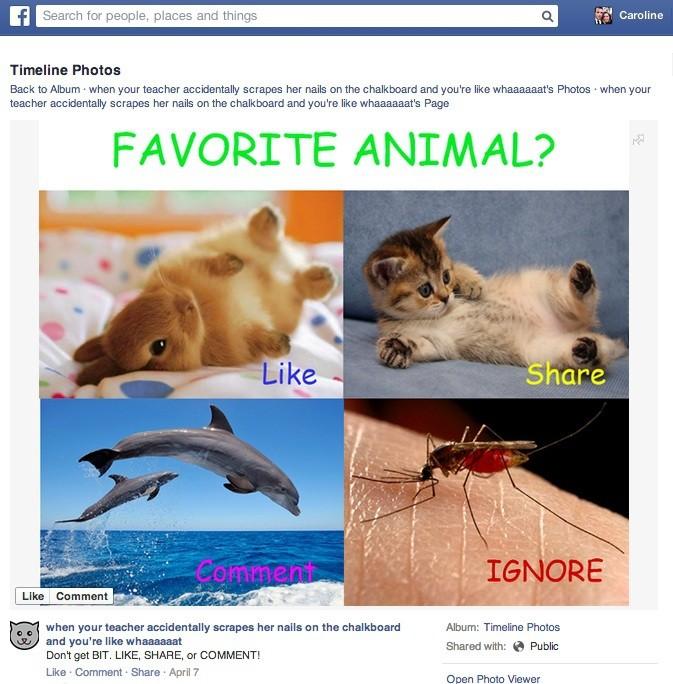 facebook feed spam news feed