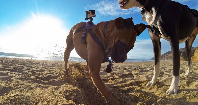gopro, dog, gopro camera