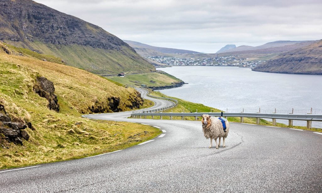 google street view, mapping, faroe islands, sheep, sheepview360, 360-degree camera