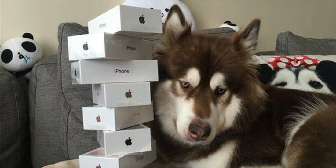 china, social media, dog, apple watch, iphone 7, billionaire, weibo