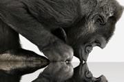 Corning's 3D Gorilla Glass will protect your curved display